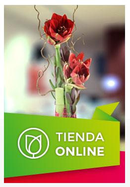 Ygnacio Guillén Floristeria Tienda Online