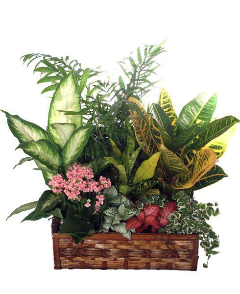 Cofre Planta grande