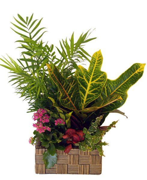 Cofre Planta mediano