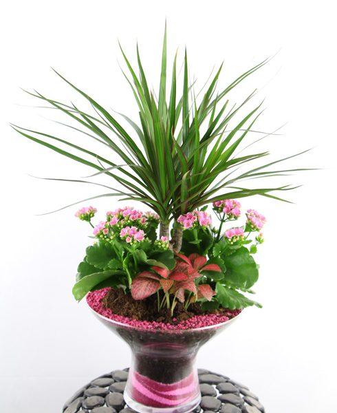 Composición de plantas en base de cristal