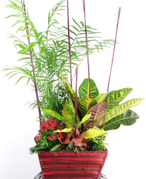Composición de plantas en cesta de mimbre