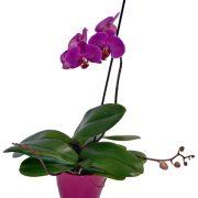 Orquídea color en base cerámica.