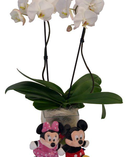 Base cristal Orquídeas y dos peluches.