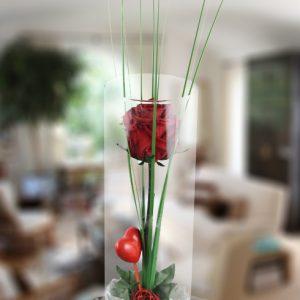 Jarrón de cristal con rosa roja estabilizada(duran para siempre)