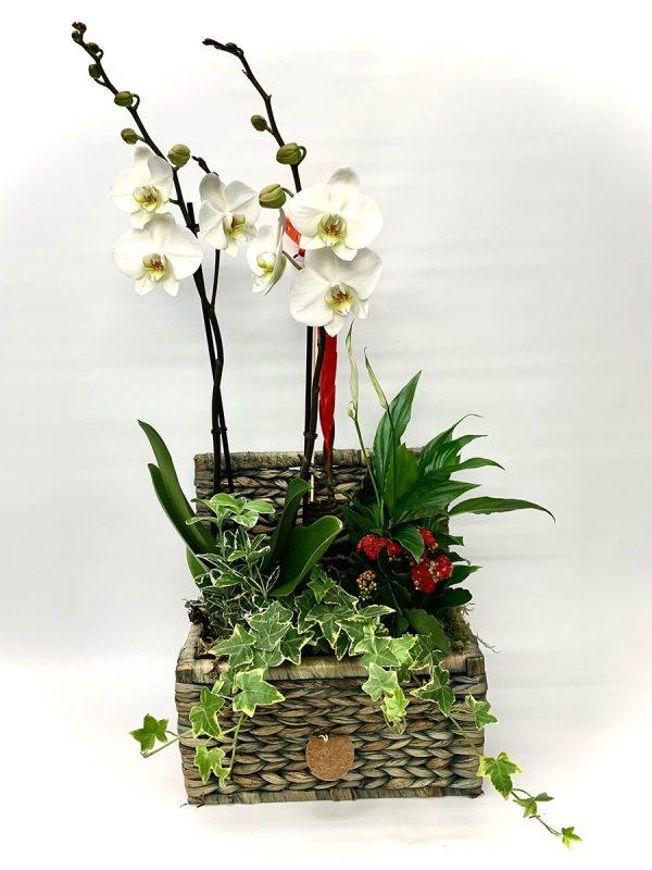 cofre de orquideas