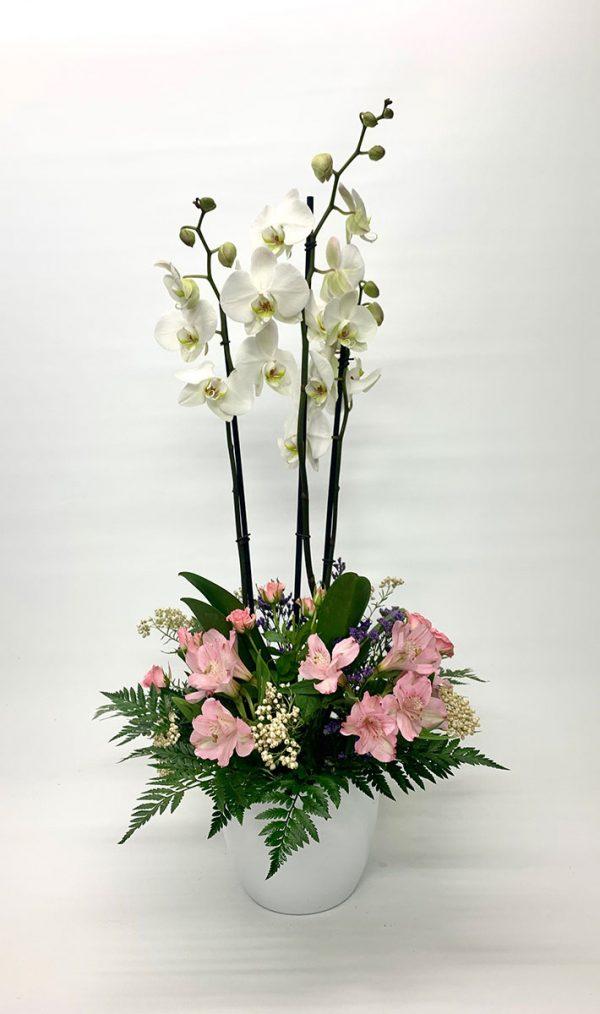 composición con orquídea