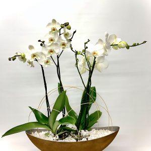 góndola óxido con orquídeas blancas