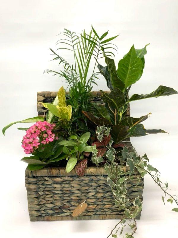 cofre de plantas